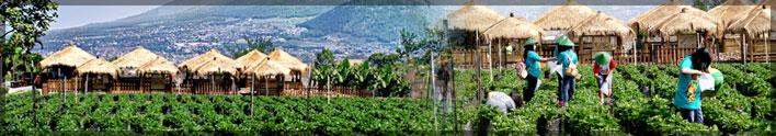 Strawberry Organic Garden